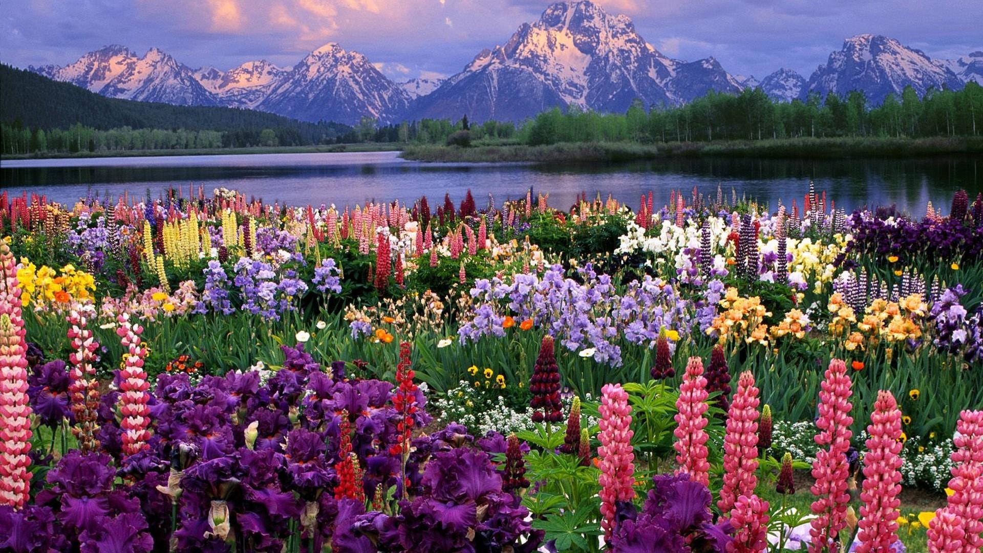 Красивые открытки природы и цветов 55
