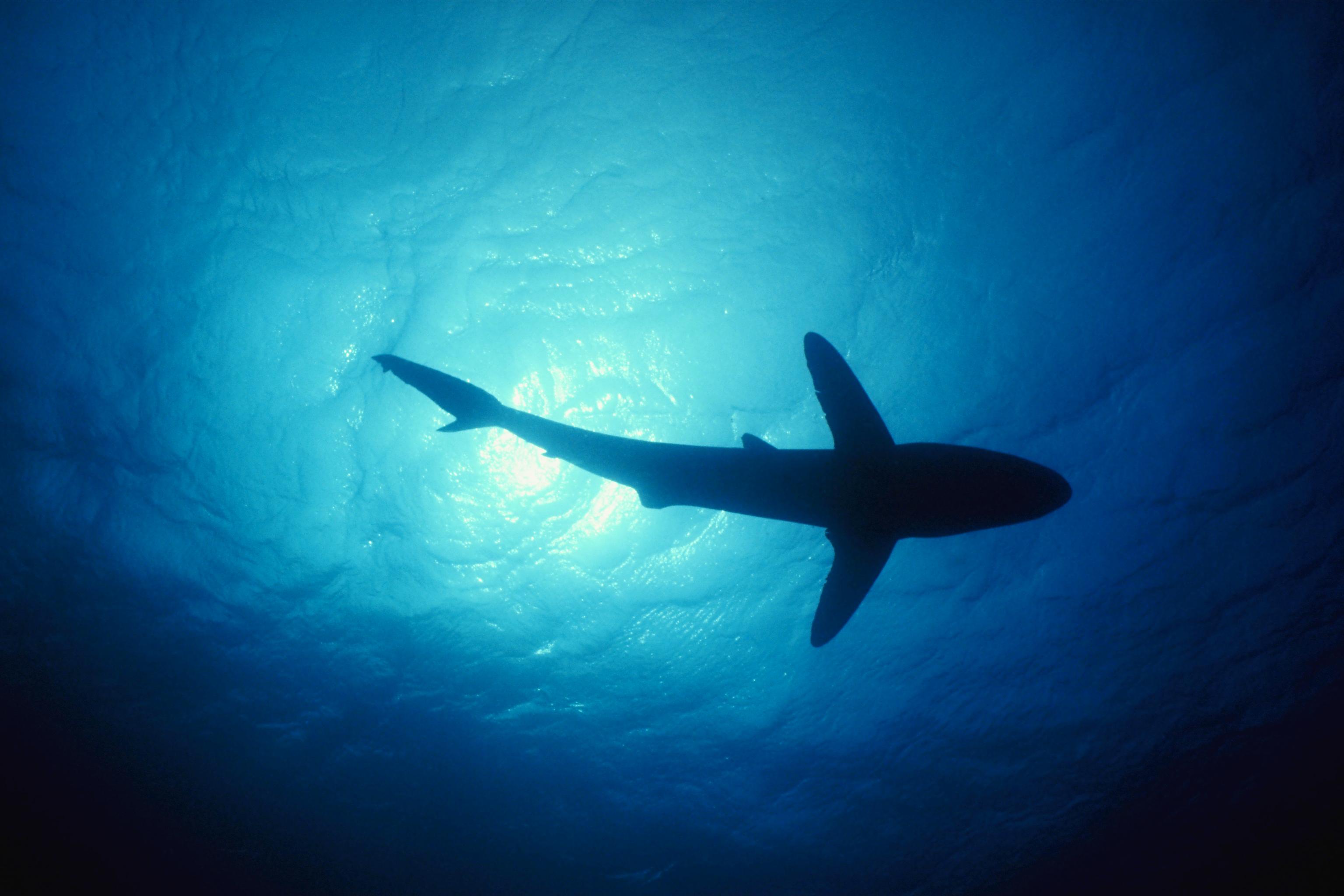 http://cdn.oboi7.com/3258f41c0598c127342e5070e90ba4f791bef20c/voda-okean-zhivotnye-ryba-akuly-pod-vodoj.jpg