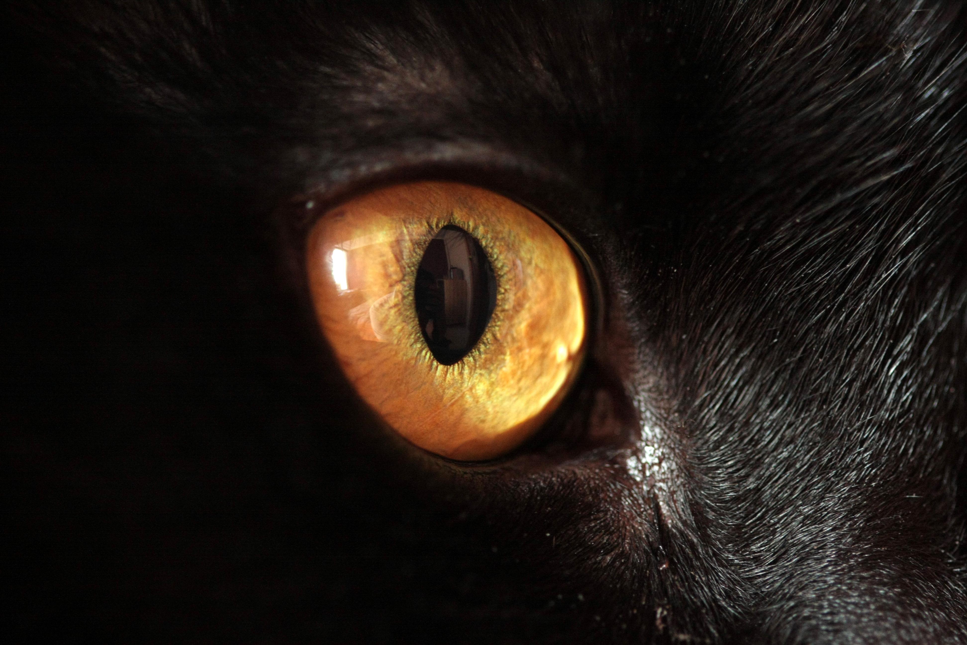 Как сделать глаза как у кошки макияж Визаж и здоровье глаз 45
