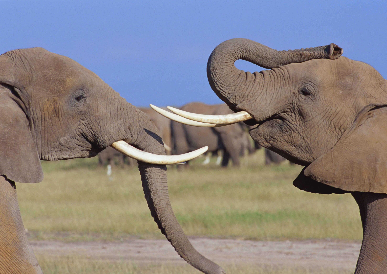 http://cdn.oboi7.com/3849f4ad06eb3ee8627d4b3cfce8aff0b2b90e8e/zhivotnye-slony.jpg