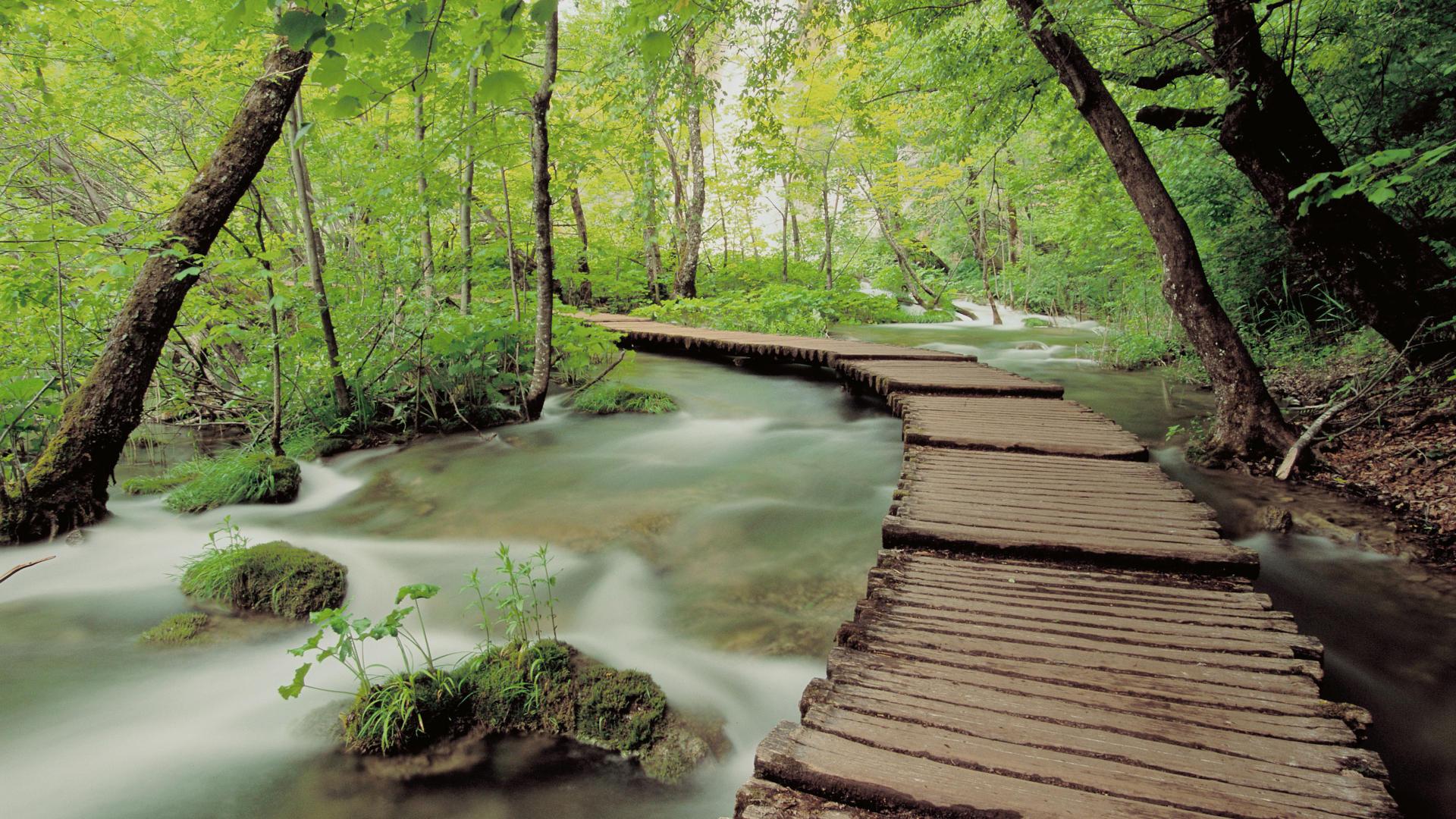 http://cdn.oboi7.com/4397d3cb536527196908cfeeb599da0da9f75e16/pejzazhi-derevya-lesa-potoki.jpg