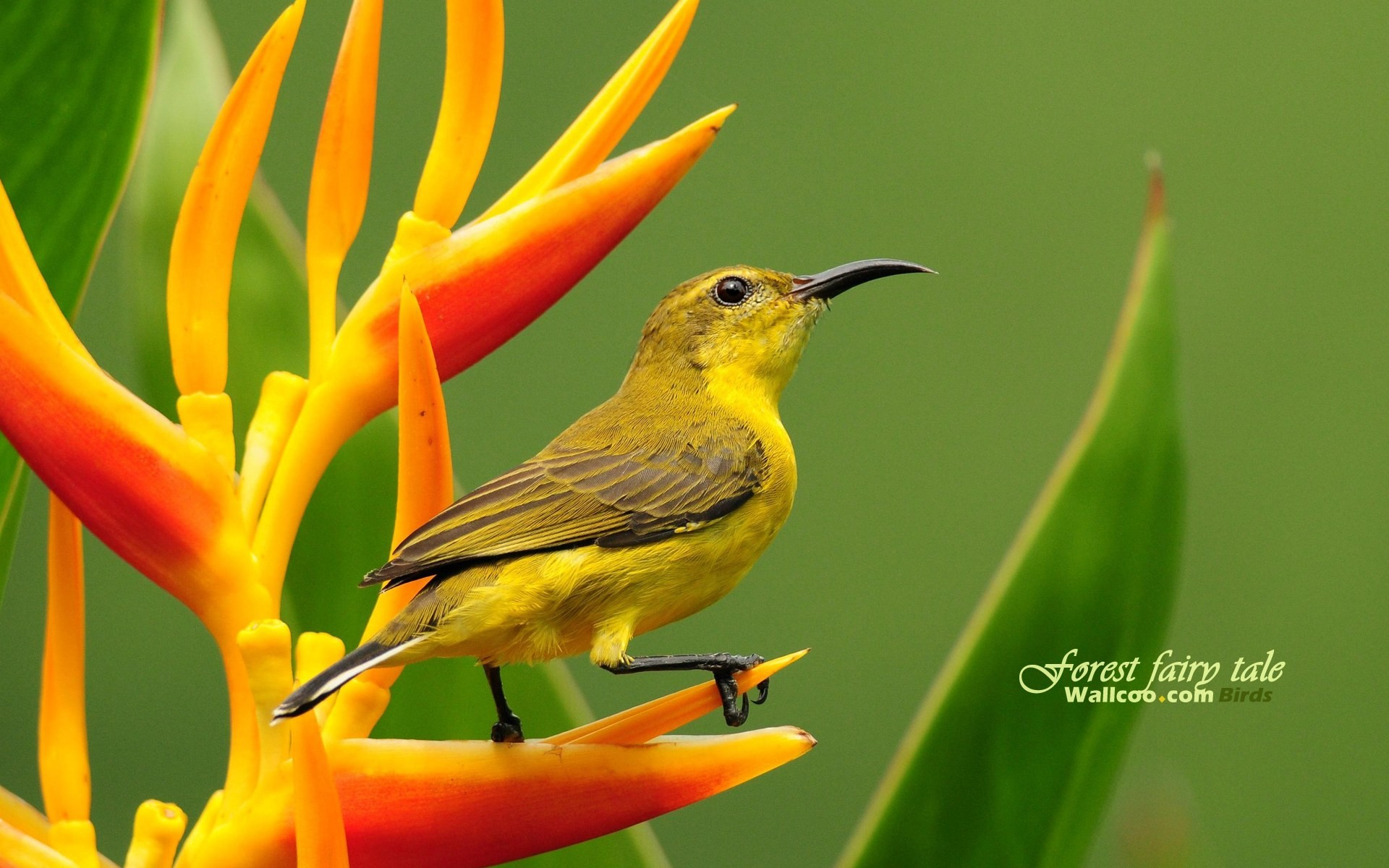http://cdn.oboi7.com/742269028d63b479274690f0d5b4ad6e2624e3ac/pticy-zhivotnye-zhivaya-priroda-sunbirds.jpg