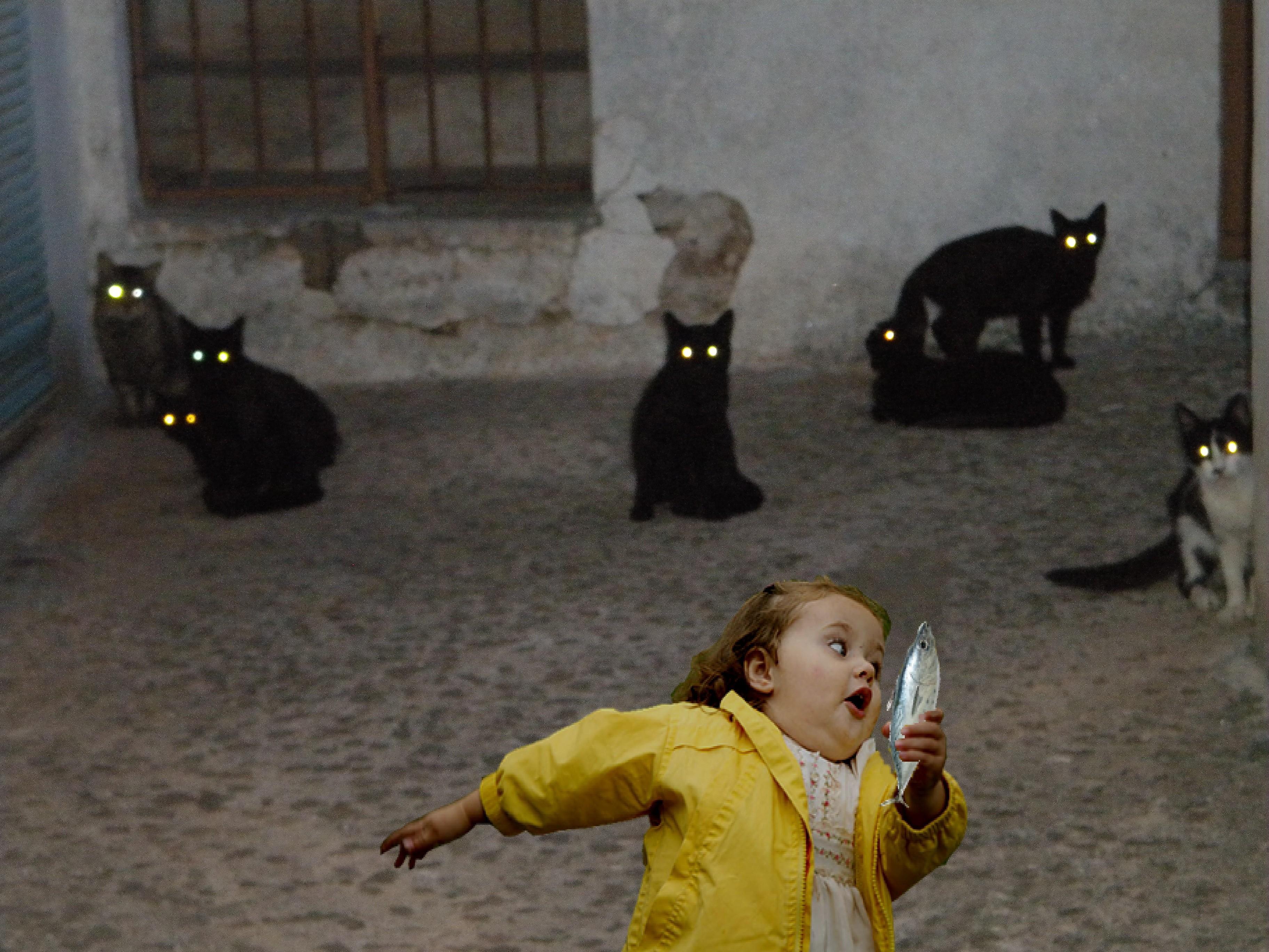 Фото прикол с котами и детьми