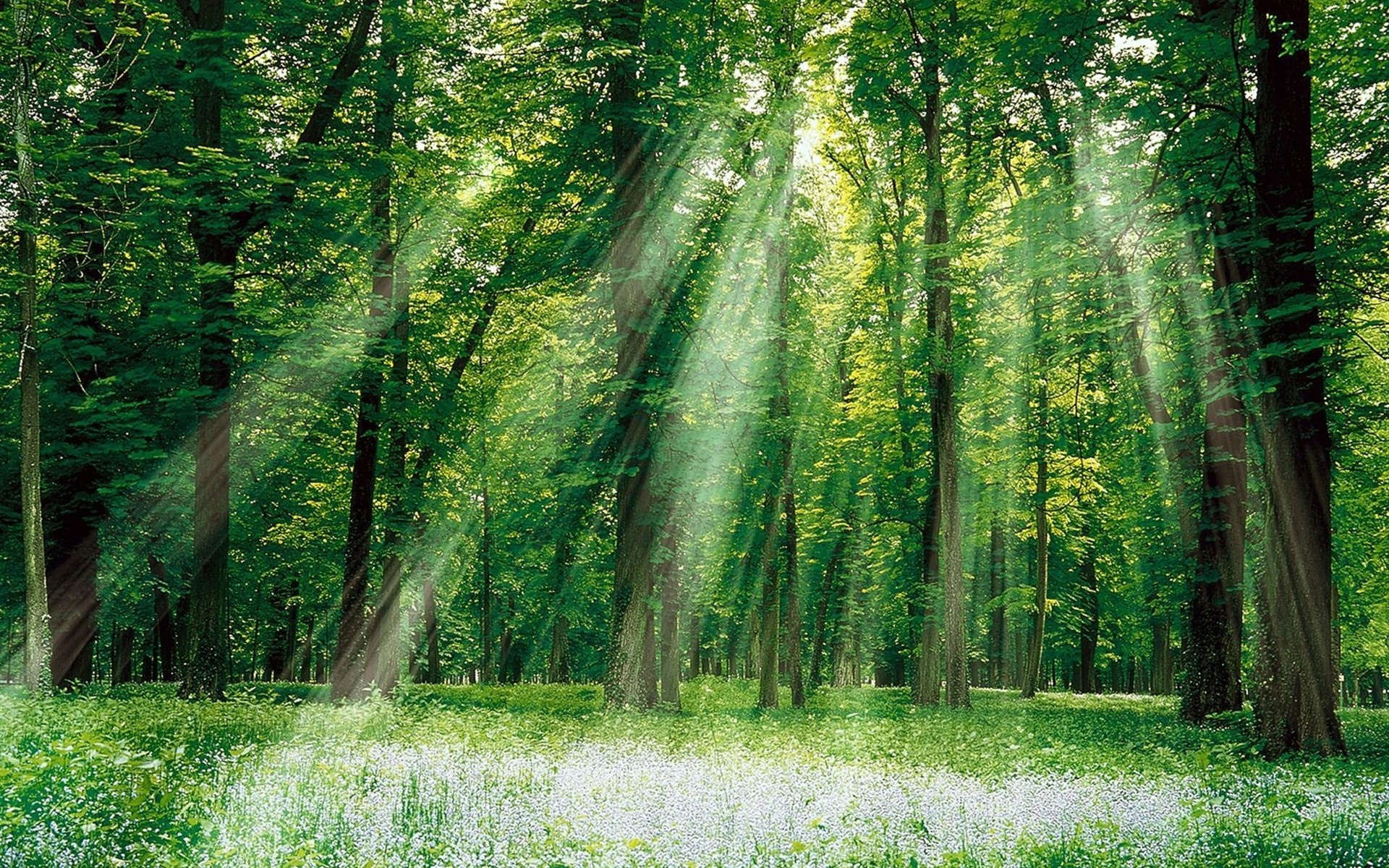 the light in the forest analysis