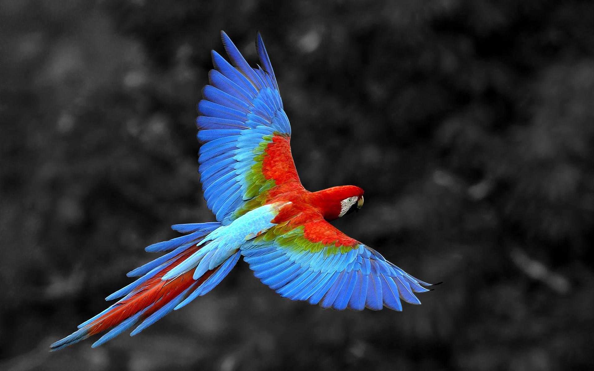 http://cdn.oboi7.com/c63098d76028fd1ad401a4d5dba16c1da29101ae/pticy-zhivotnye-popugai-vyborochnaya-raskraska-rio.jpg