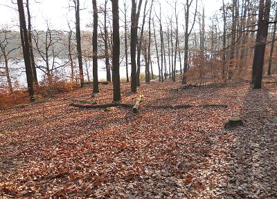 природа, деревья, осень - обои на рабочий стол