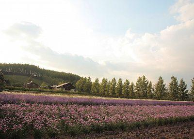 пейзажи, природа, деревья, цветы - обои на рабочий стол