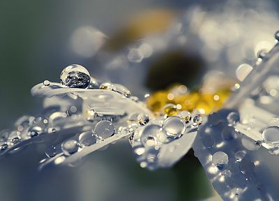 вода, крупный план, природа, дождь, цветы, капли воды, макро - новые обои для рабочего стола