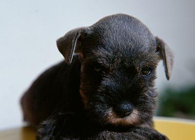 животные, собаки - обои на рабочий стол