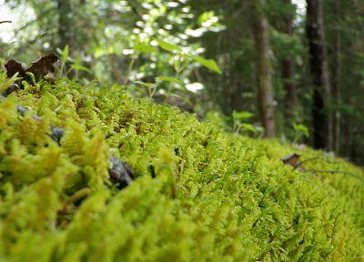 леса - случайные обои с целью рабочего стола