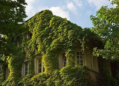 зеленый, природа, дома - обои на рабочий стол