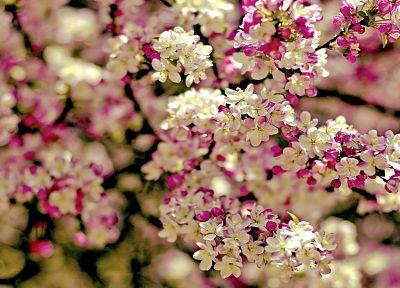 деревья, цветы, глубина резкости - обои на рабочий стол
