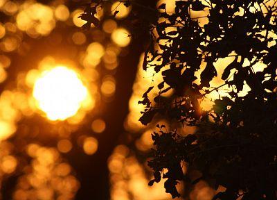 природа, Солнце, листья, боке, макро, глубина резкости - обои на рабочий стол