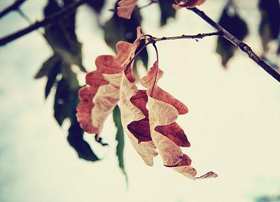 природа, листья - популярные обои на рабочий стол
