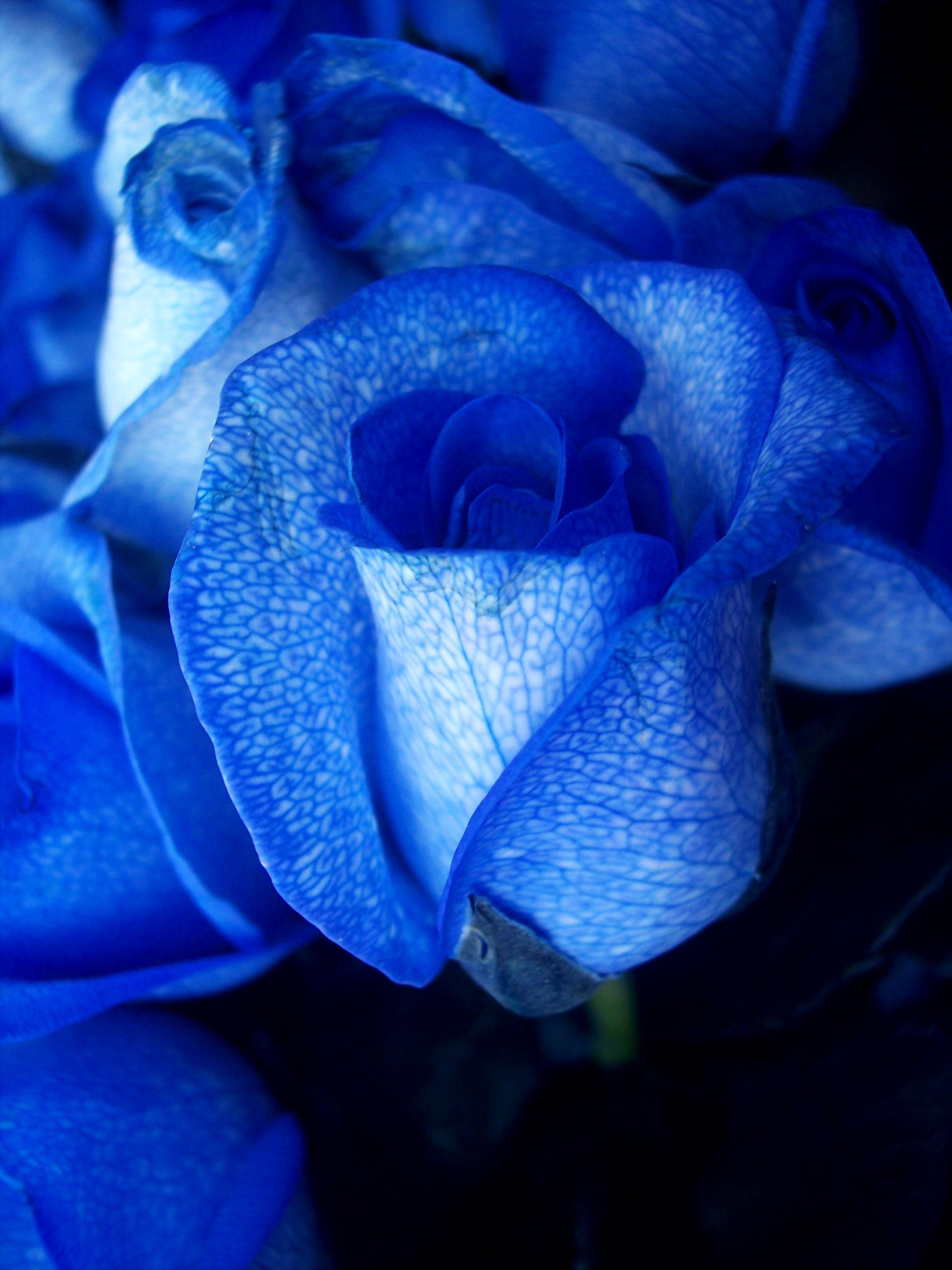 Синие розовые картинки