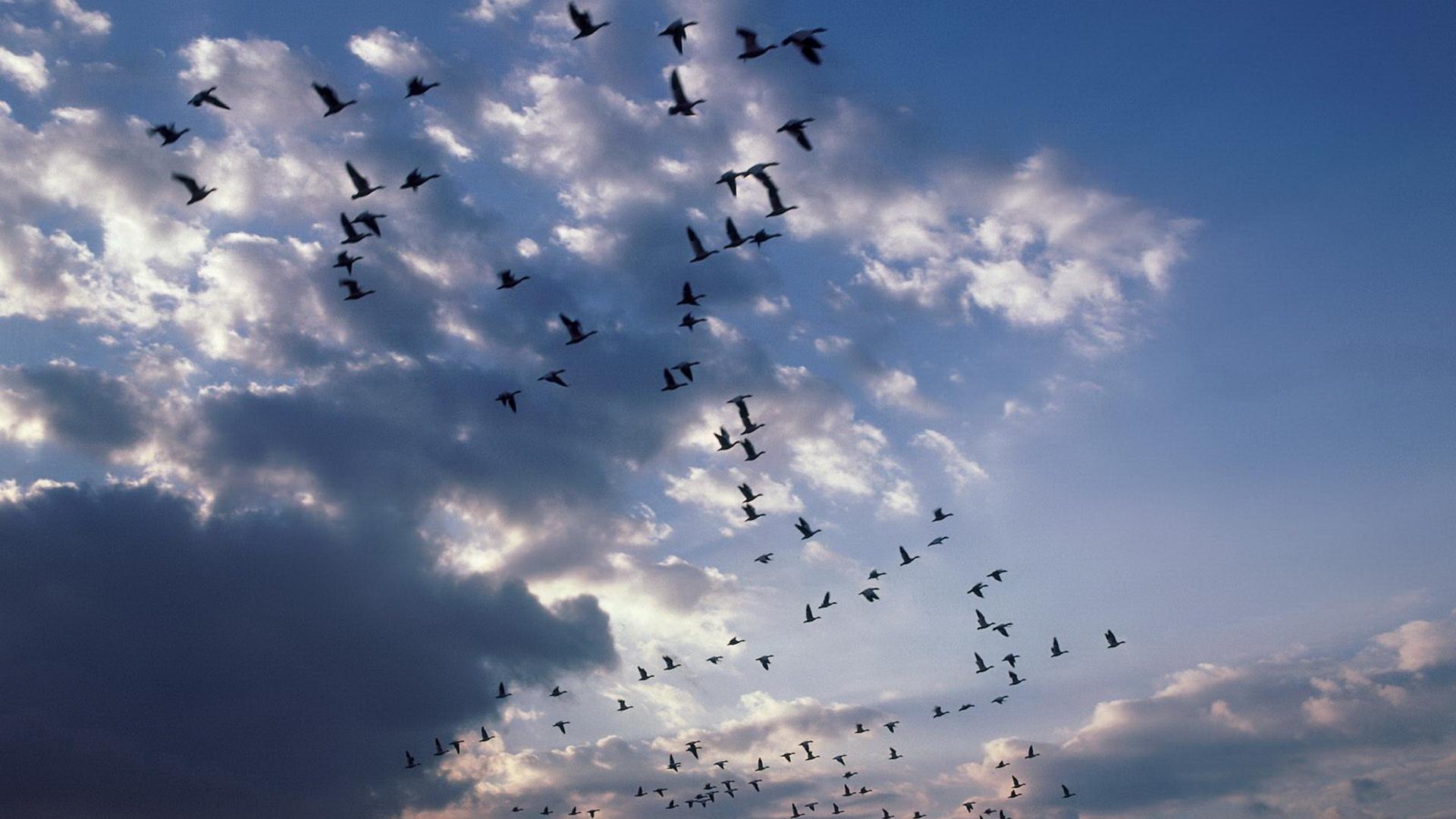 К чему снятся птицы по соннику: птицы, птички - снилась птица - то к вам приедет давний друг.