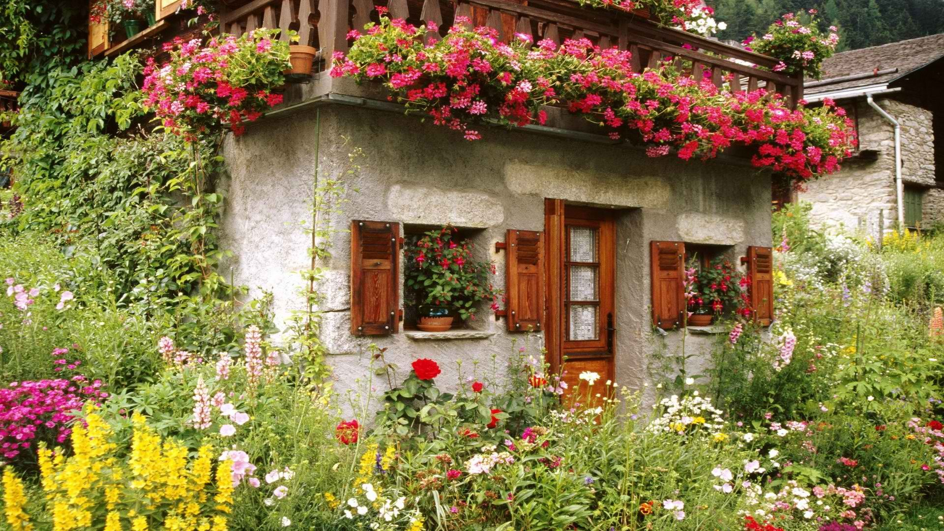 обои на рабочий стол цветы на даче