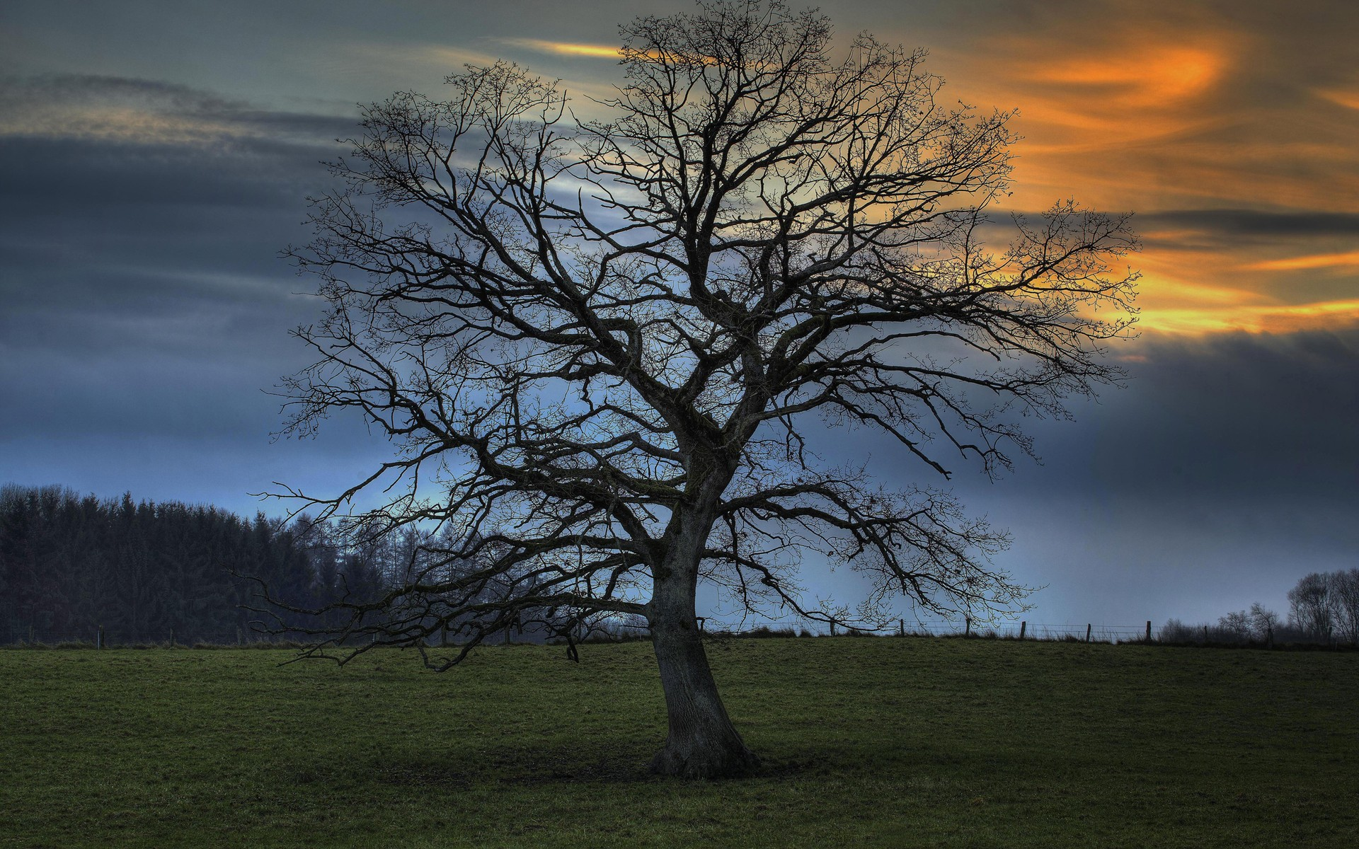 собаки дерево без листвы фото возведение