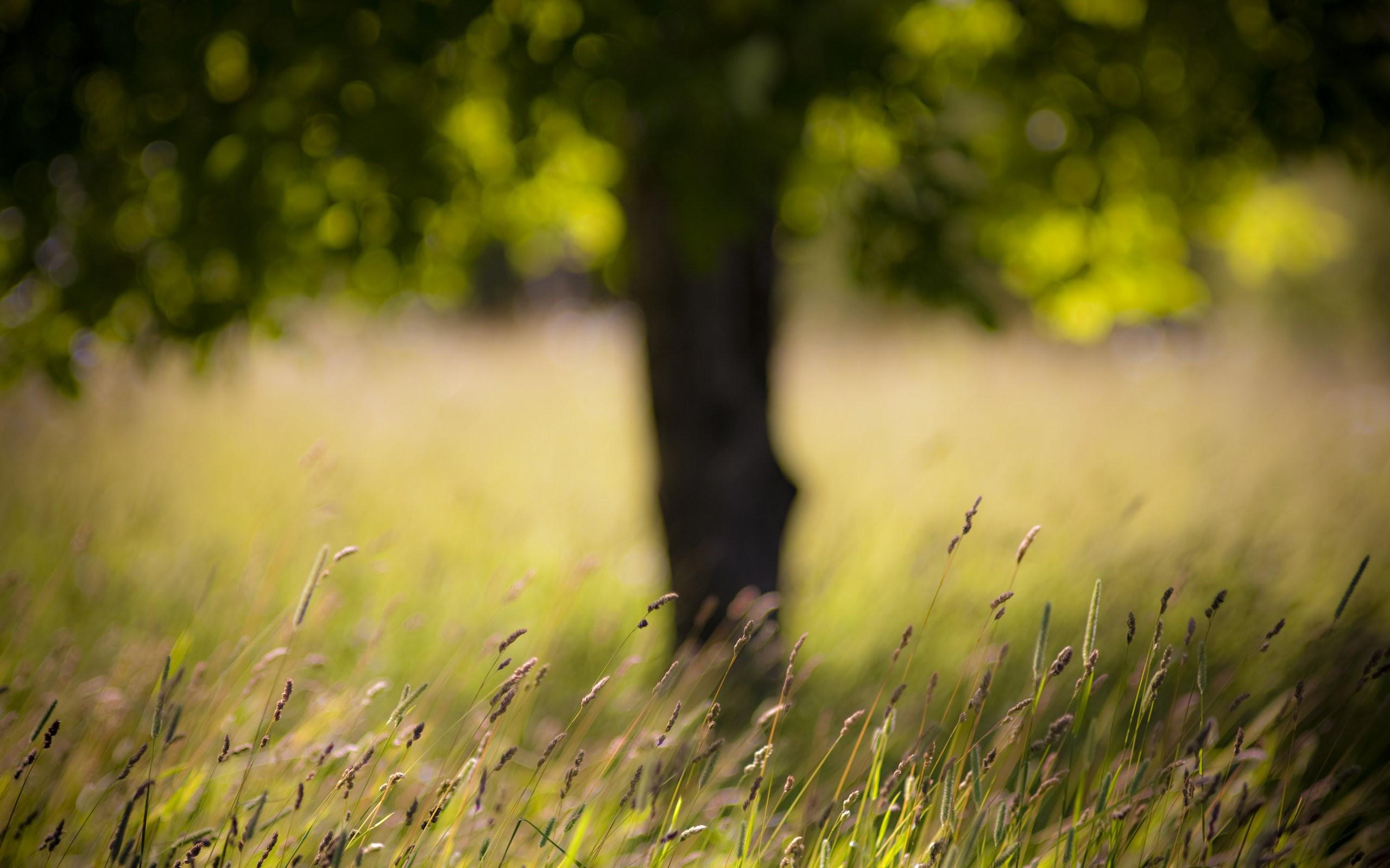 садоводы отредактировать фотографию задний фон природа это