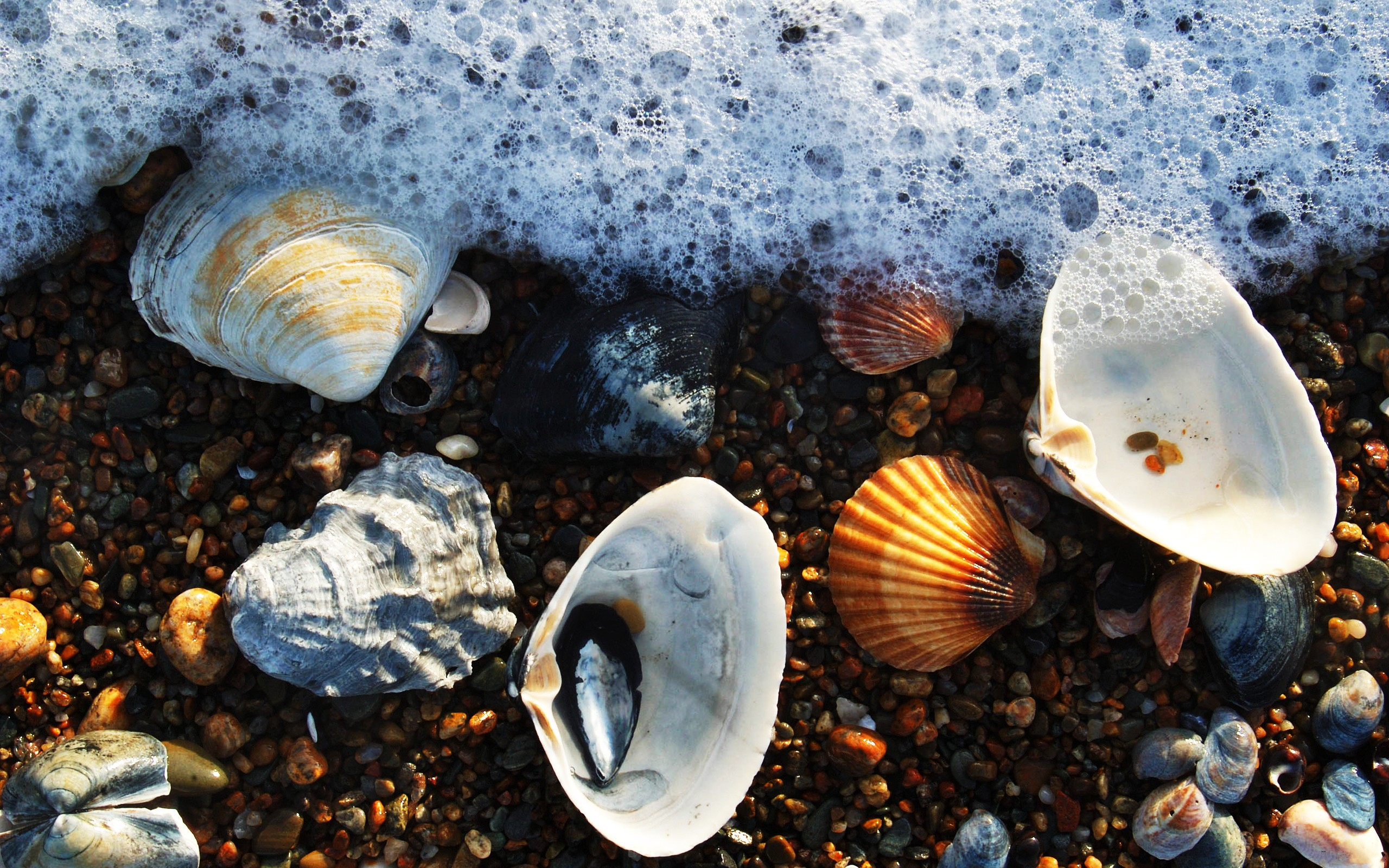 Февраля, картинки на рабочий стол ракушки и море
