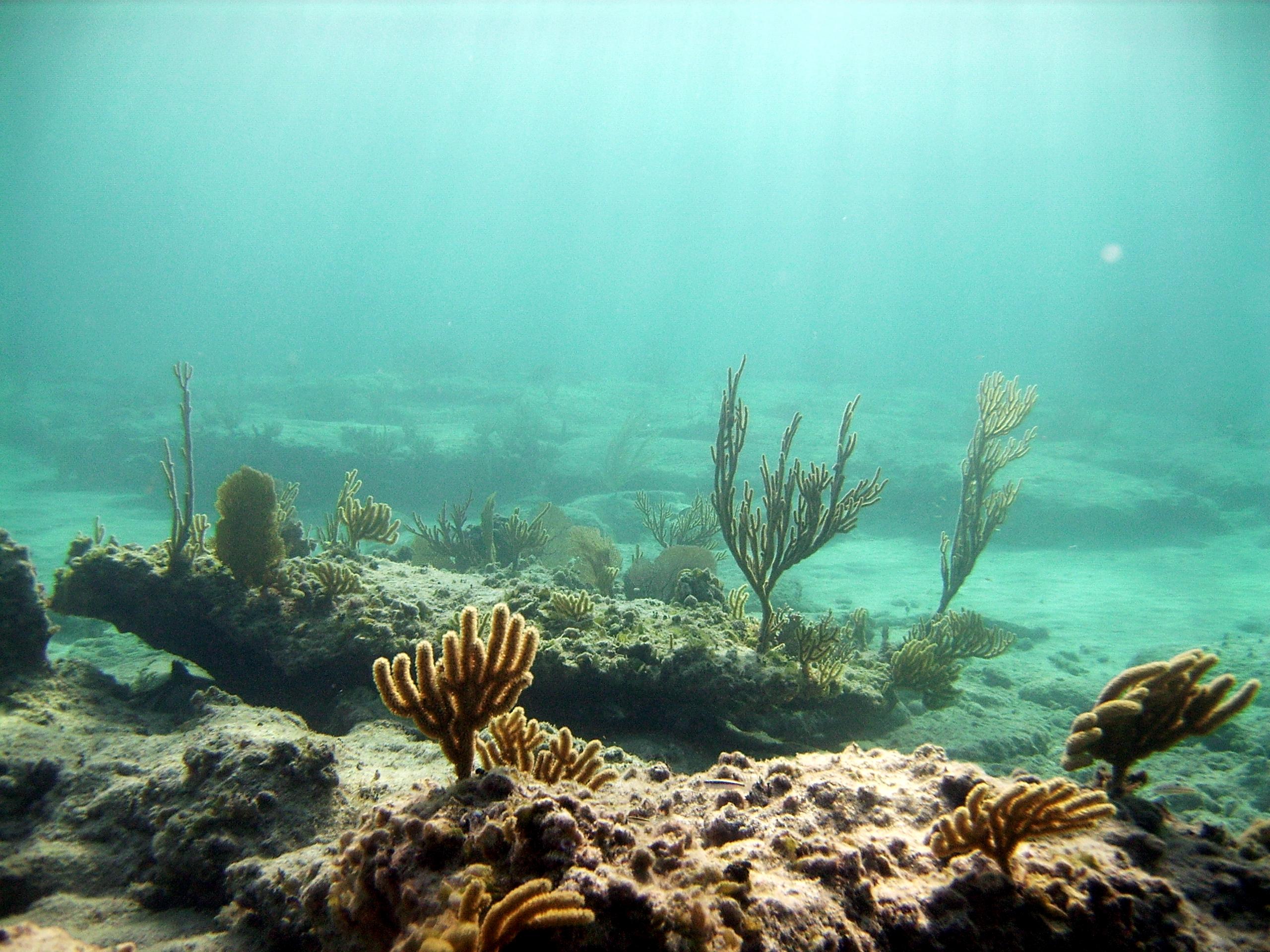 картинки под водой высокого качества пионы можно сделать