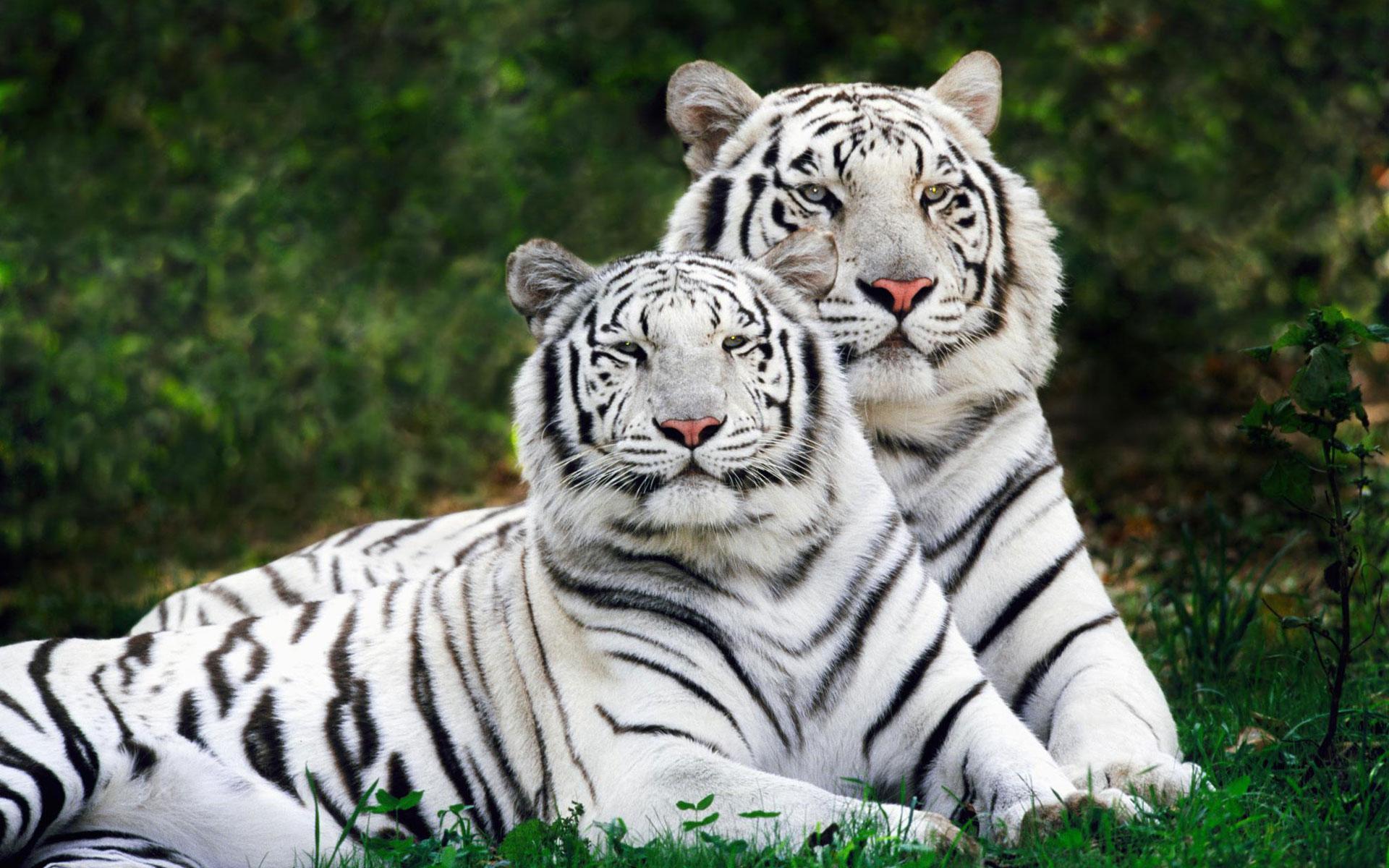 Картинки животных больших размеров