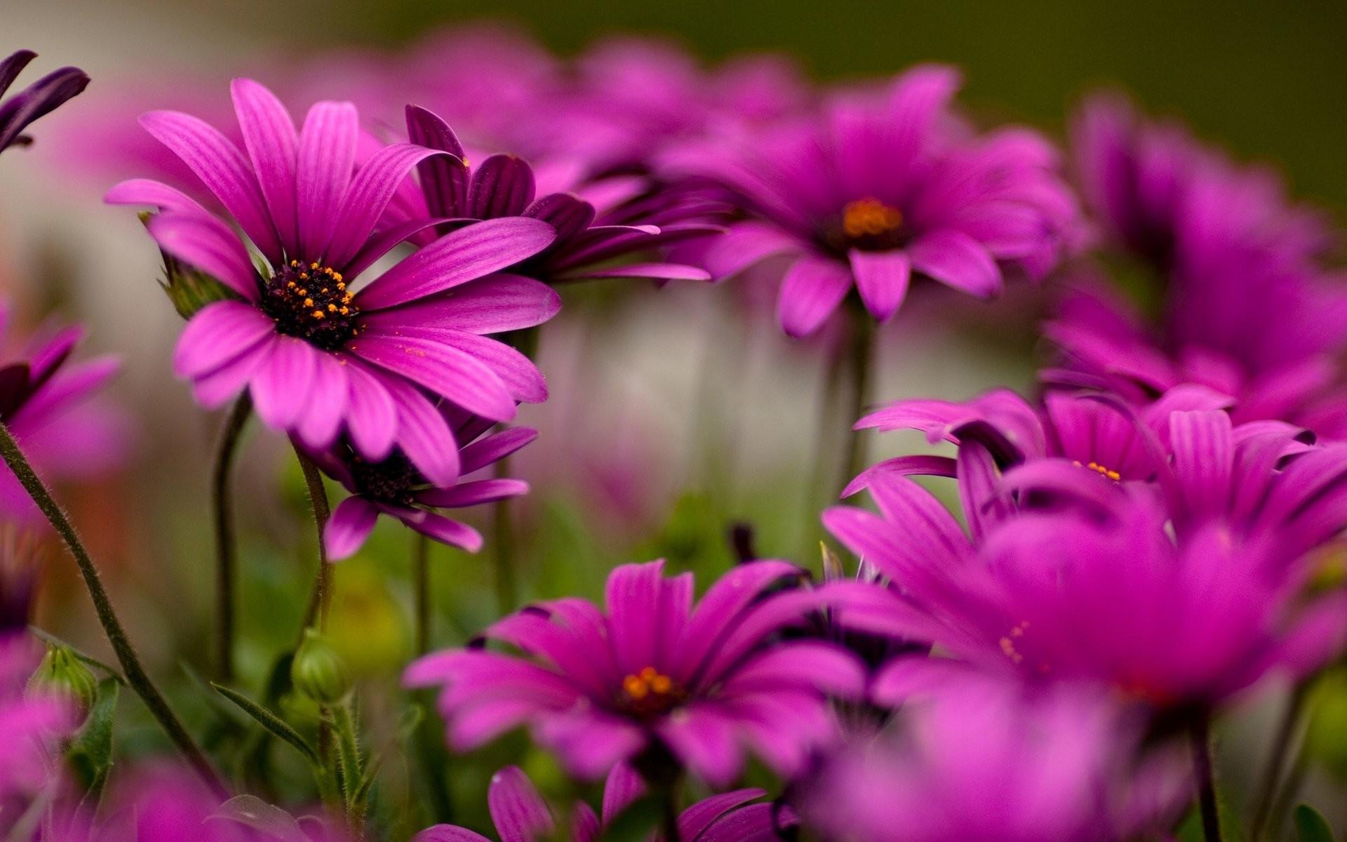 Картинки на телефон цветы, теще днем матери