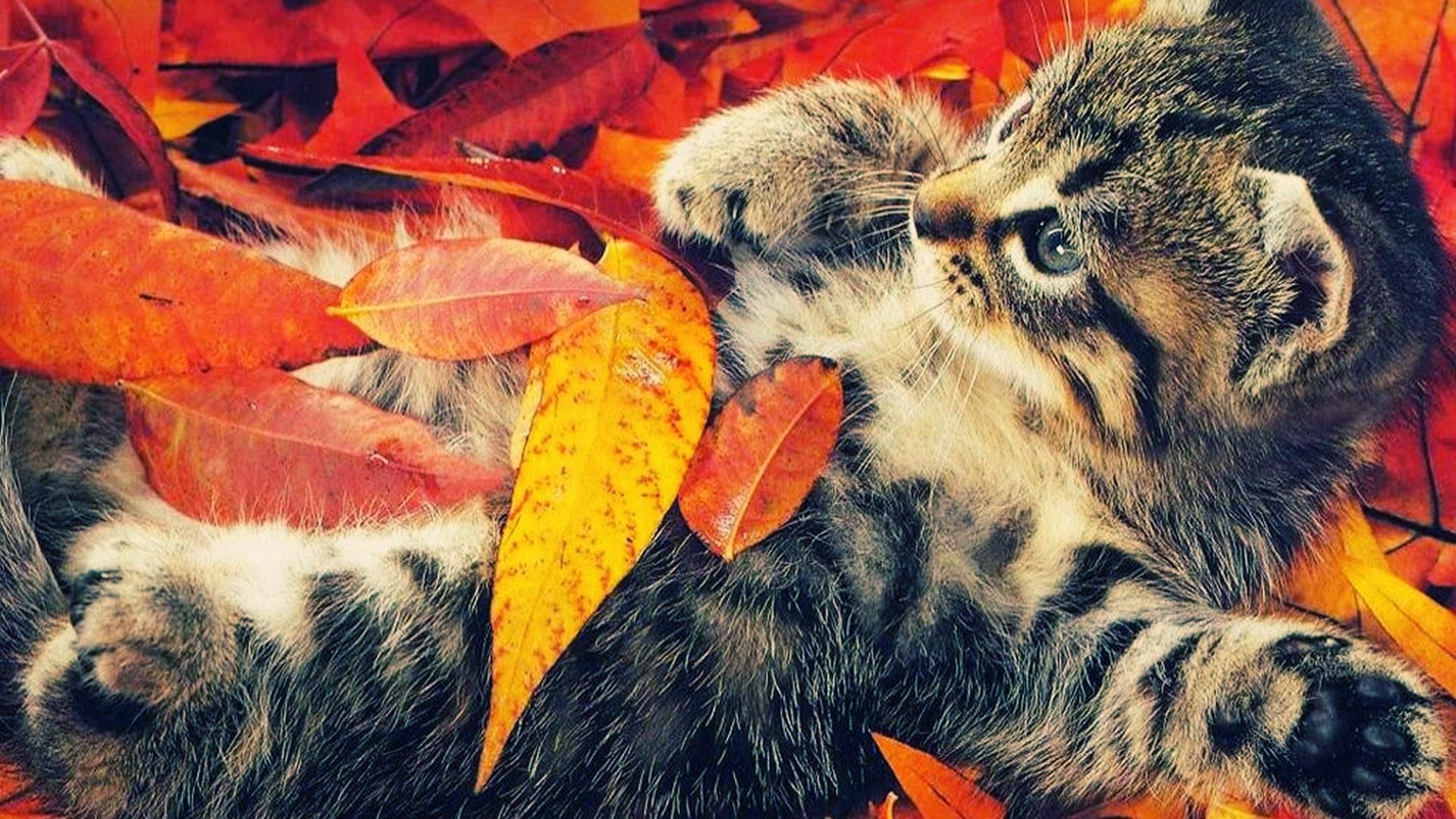 Осенний приветик картинки с кошками