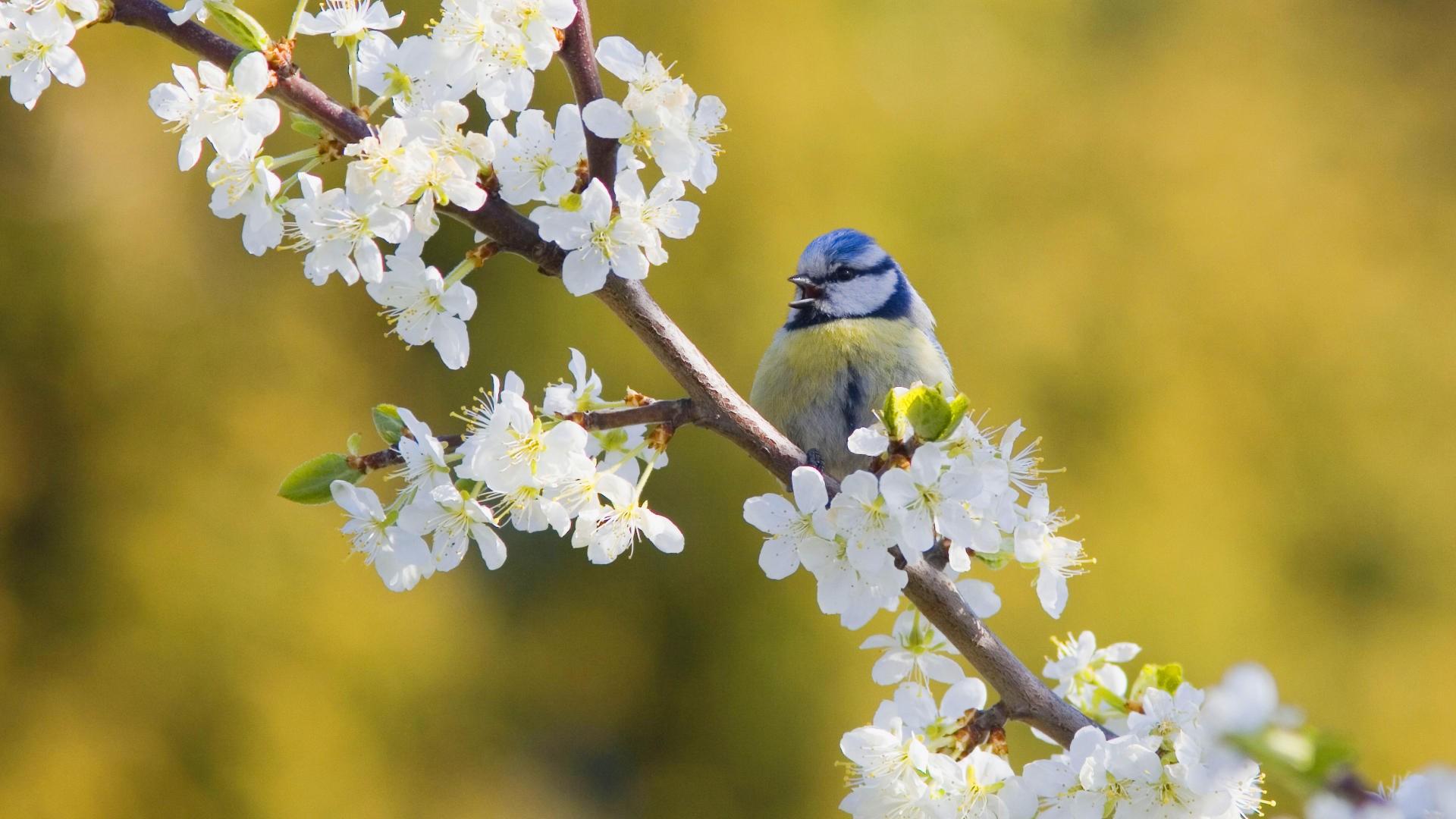 Открытка пение птиц