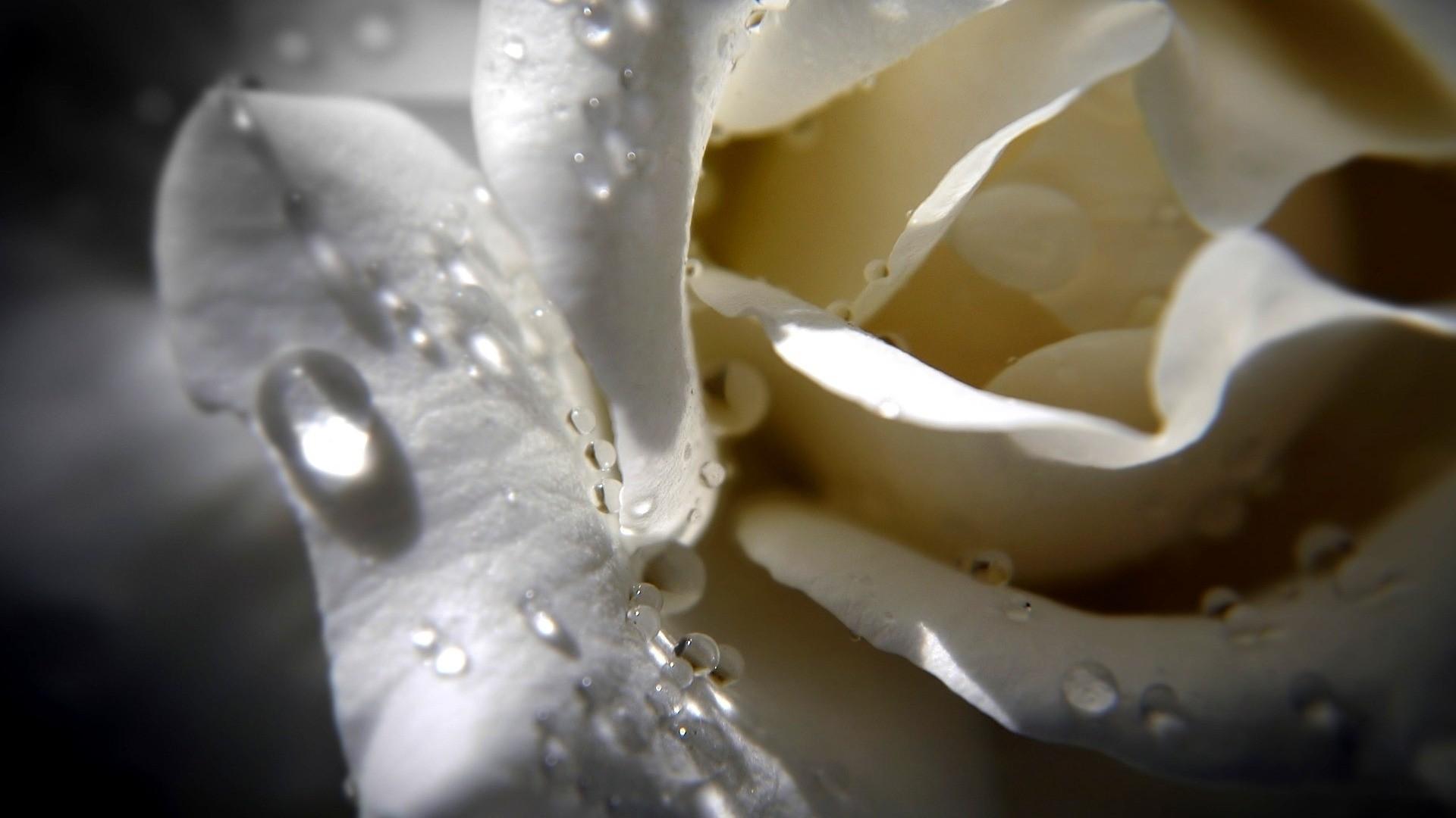 красивая картинка с цветком и слезой отеле просторная