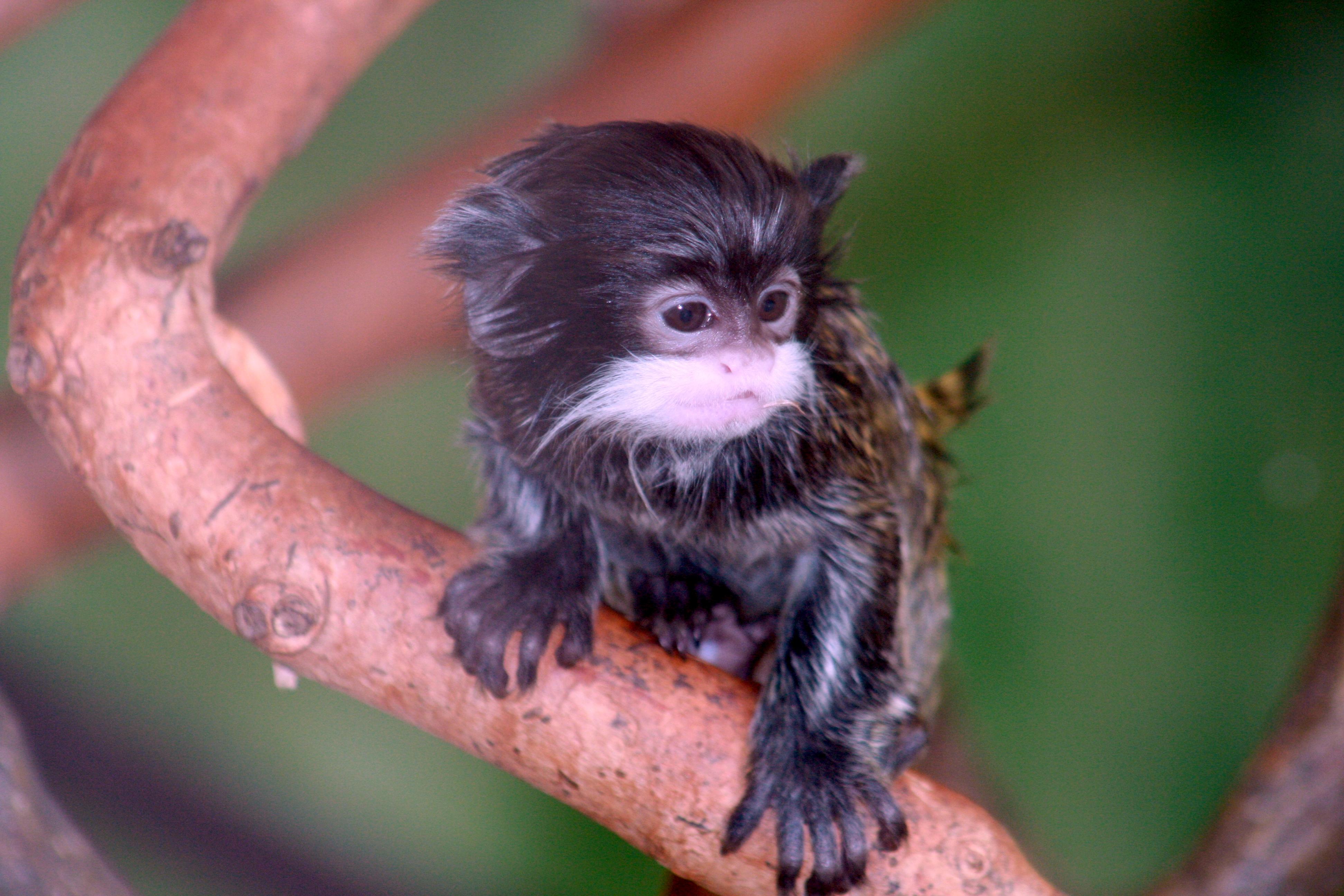 фото самого экзотического животного фотографии такой