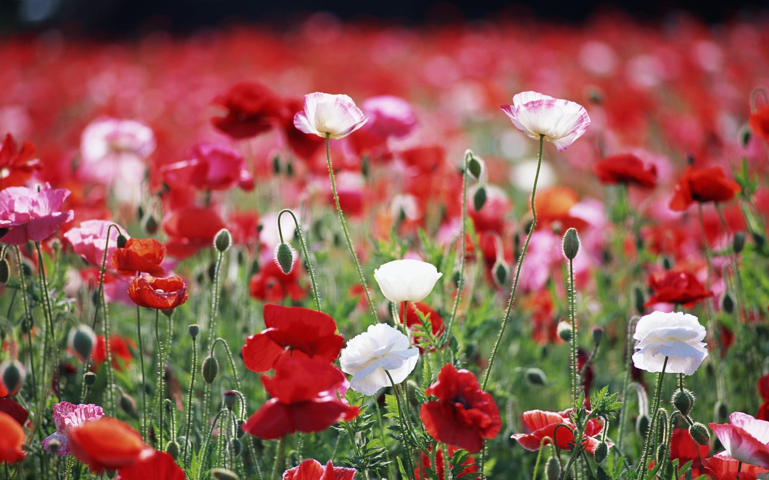 Красные цветы белые цветы