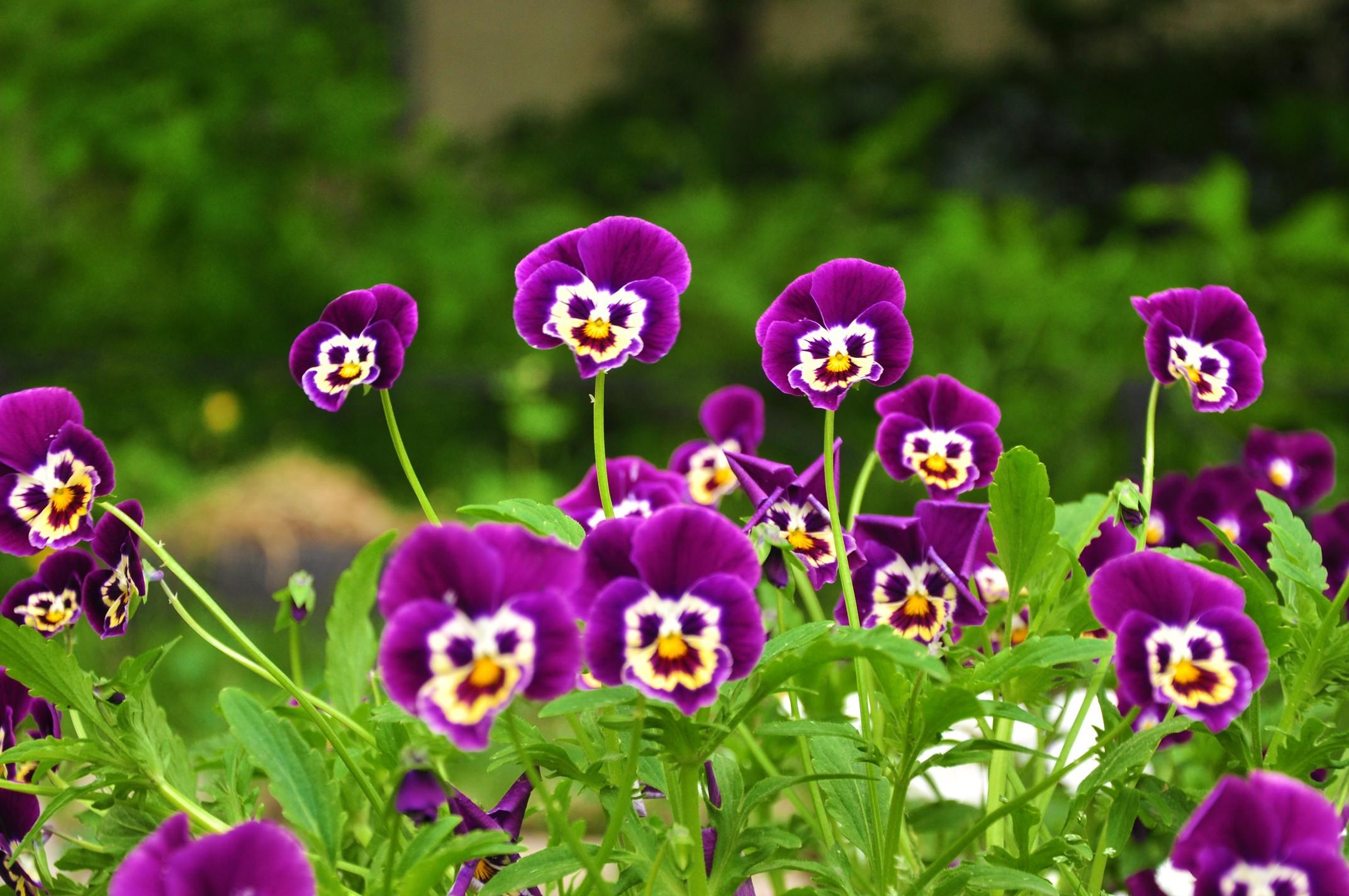 Ледоколами, картинки красивые и прикольные цветы