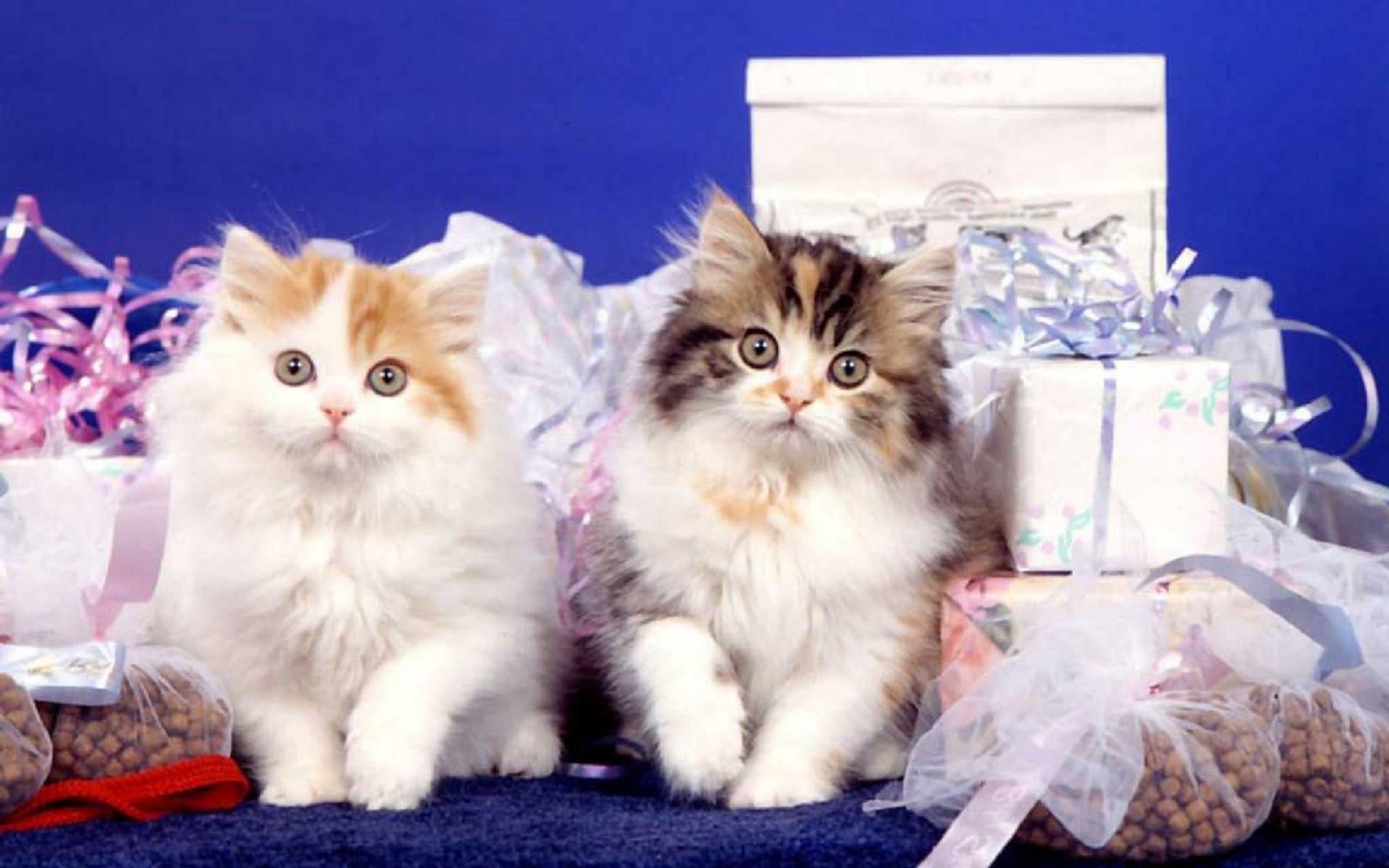 Для, открытки или фото с кошками