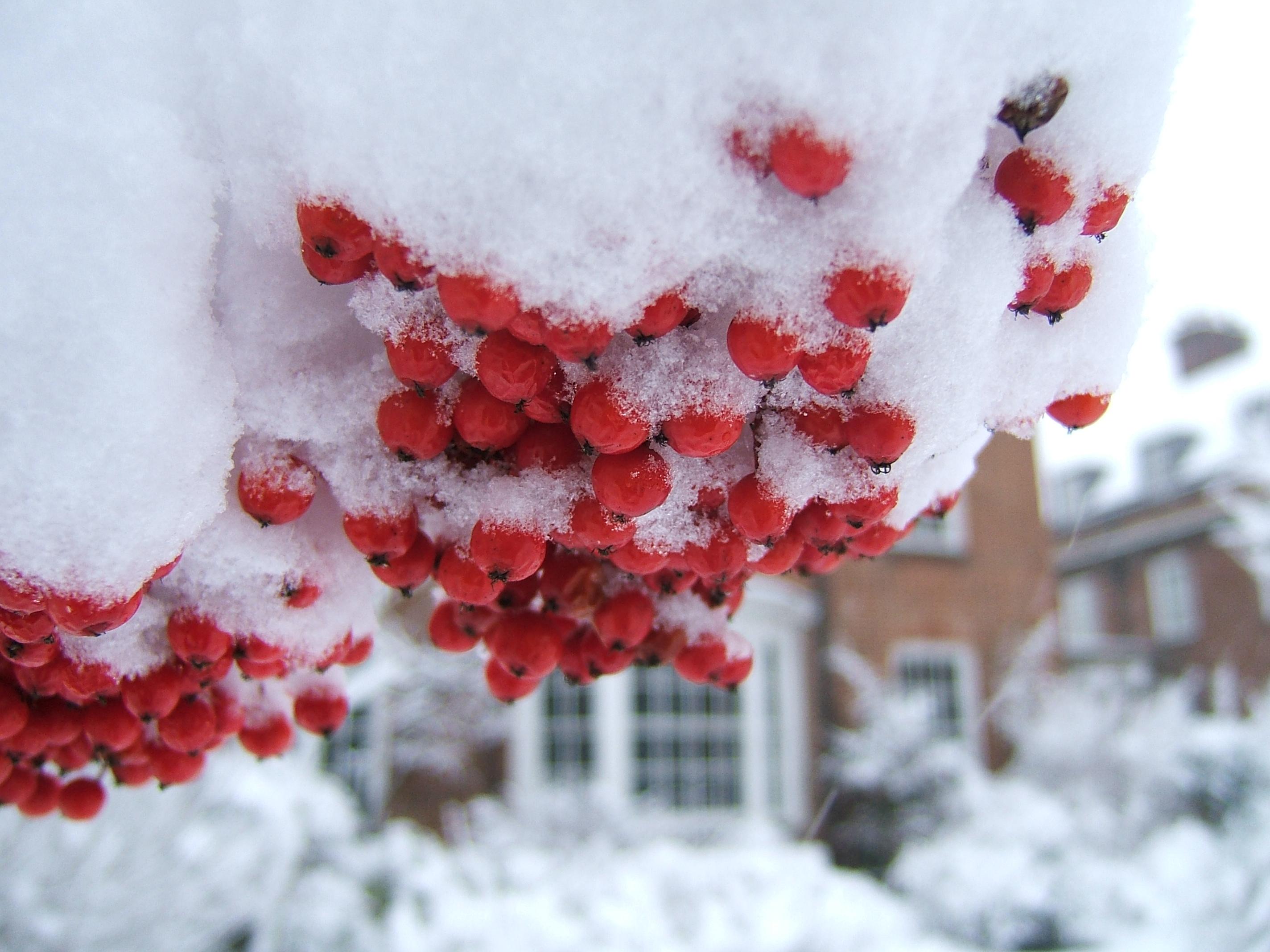 Фрукты На Снегу Картинки На Рабочий Стол