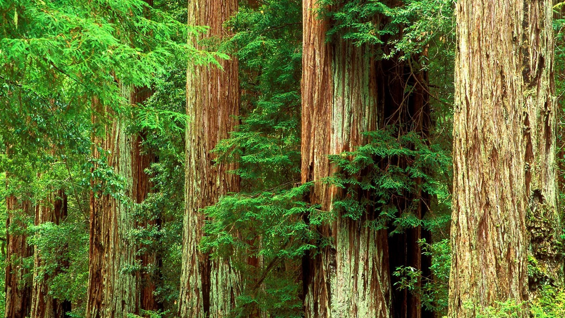 lo rewilding trees forests - HD1600×1200