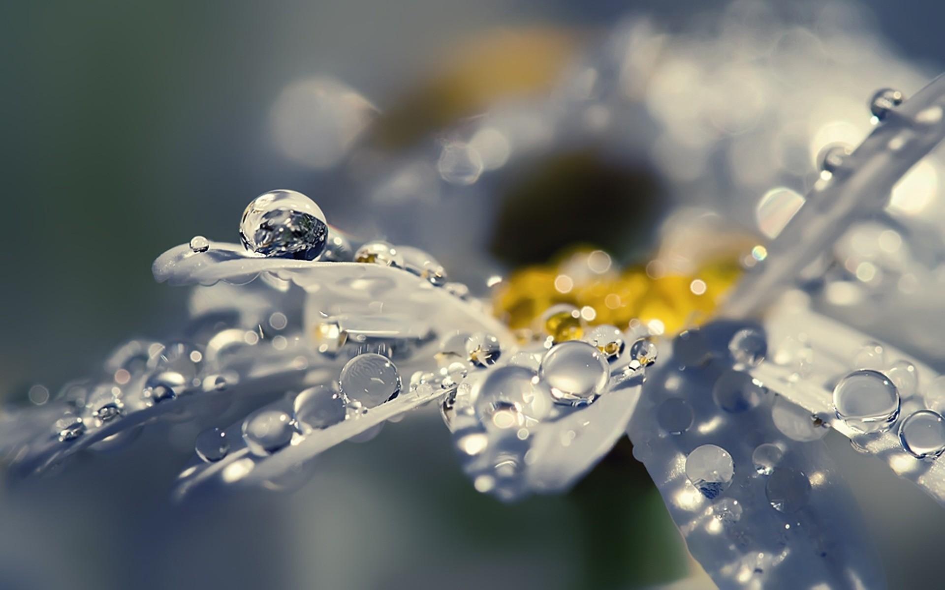 Капли воды на цветах