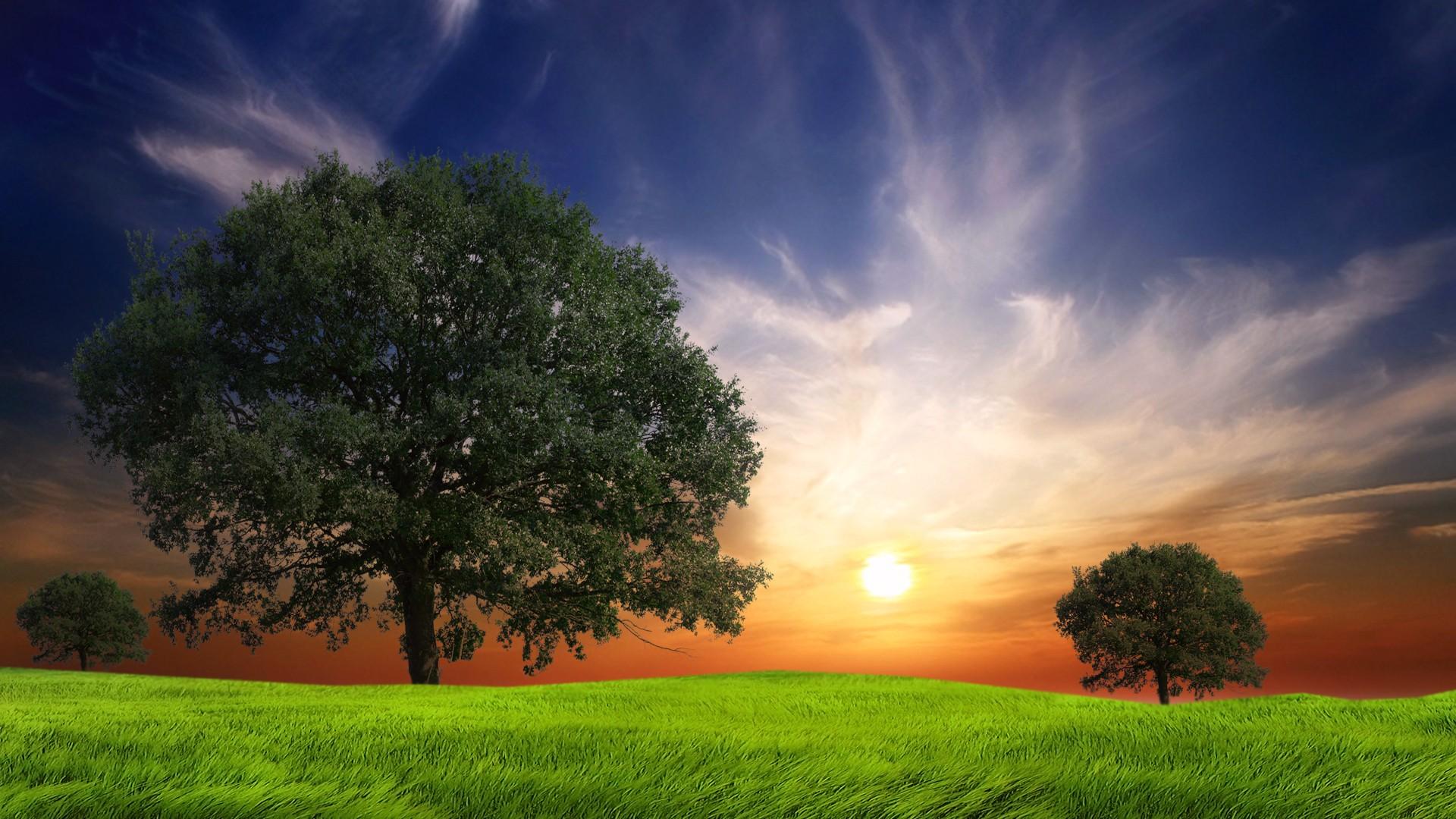 Картинки красивые небо природа зеленая деревья