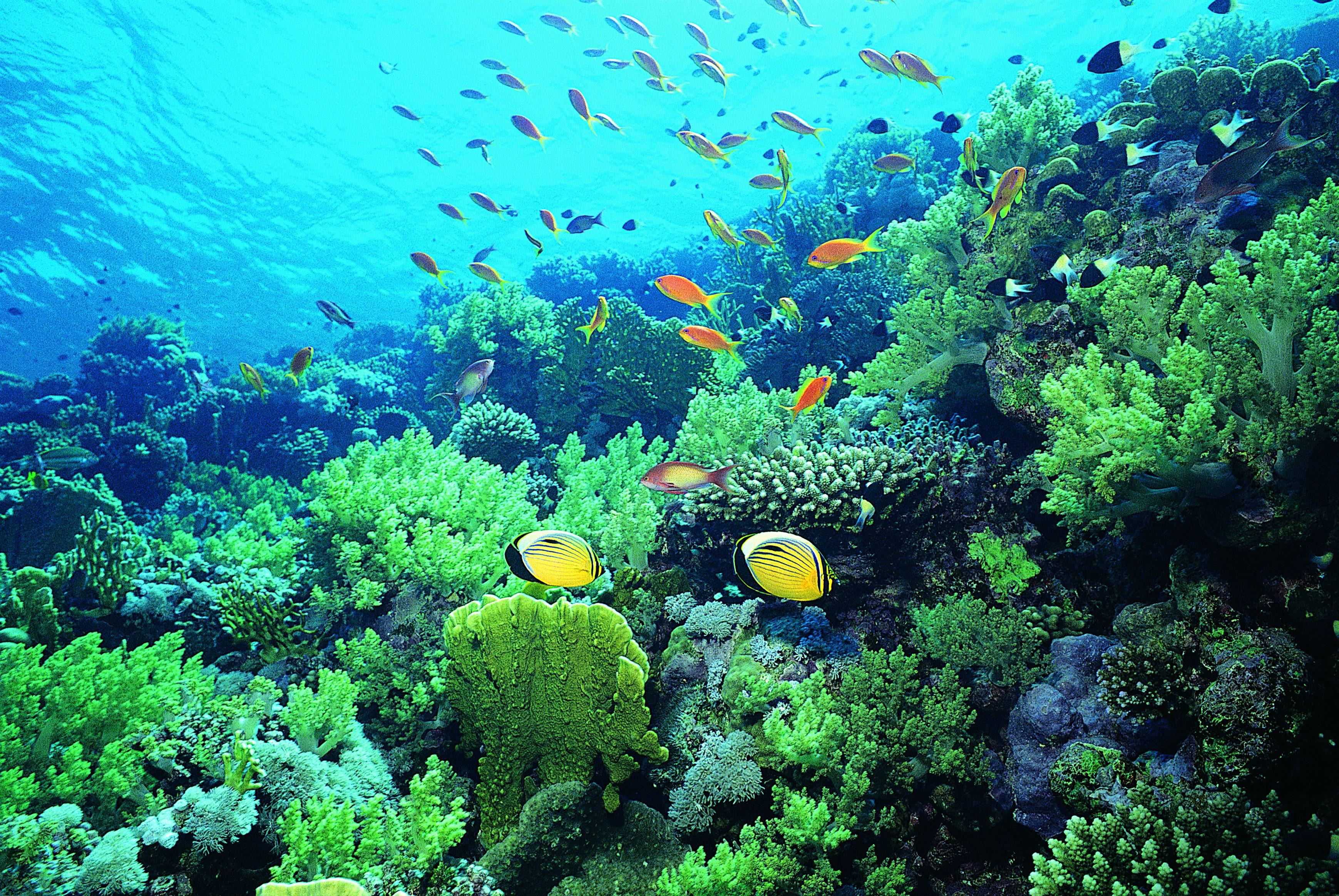 Картинки о водной среде
