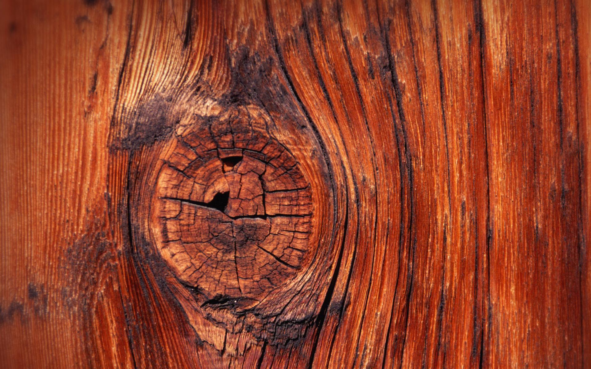 Обои На Телефон Дерево