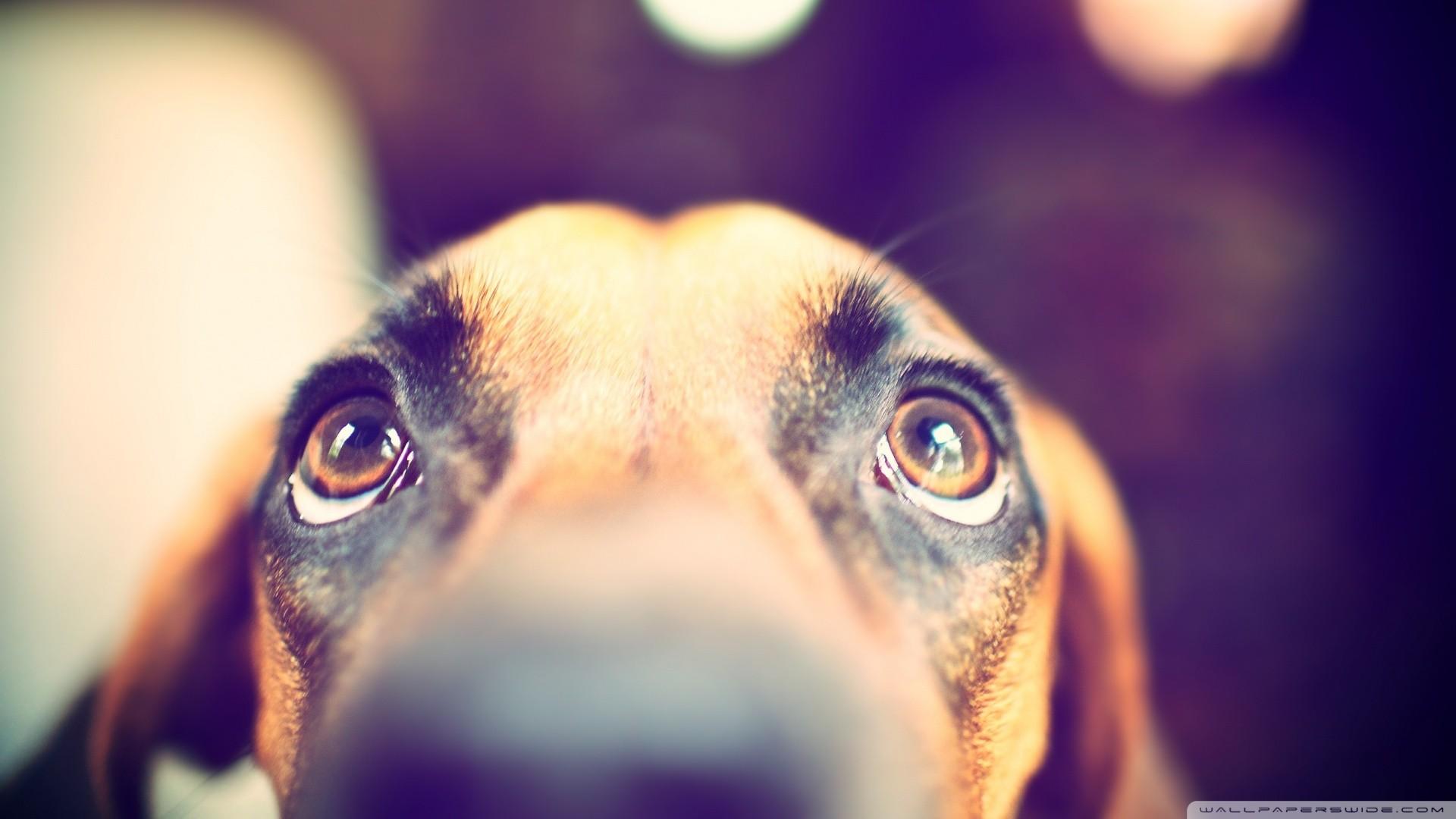 Днем, картинки грустные глаза животных