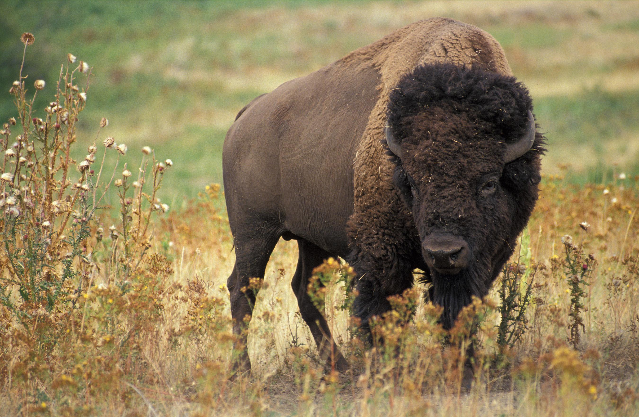 мире природа америки картинки животных рабеимякак