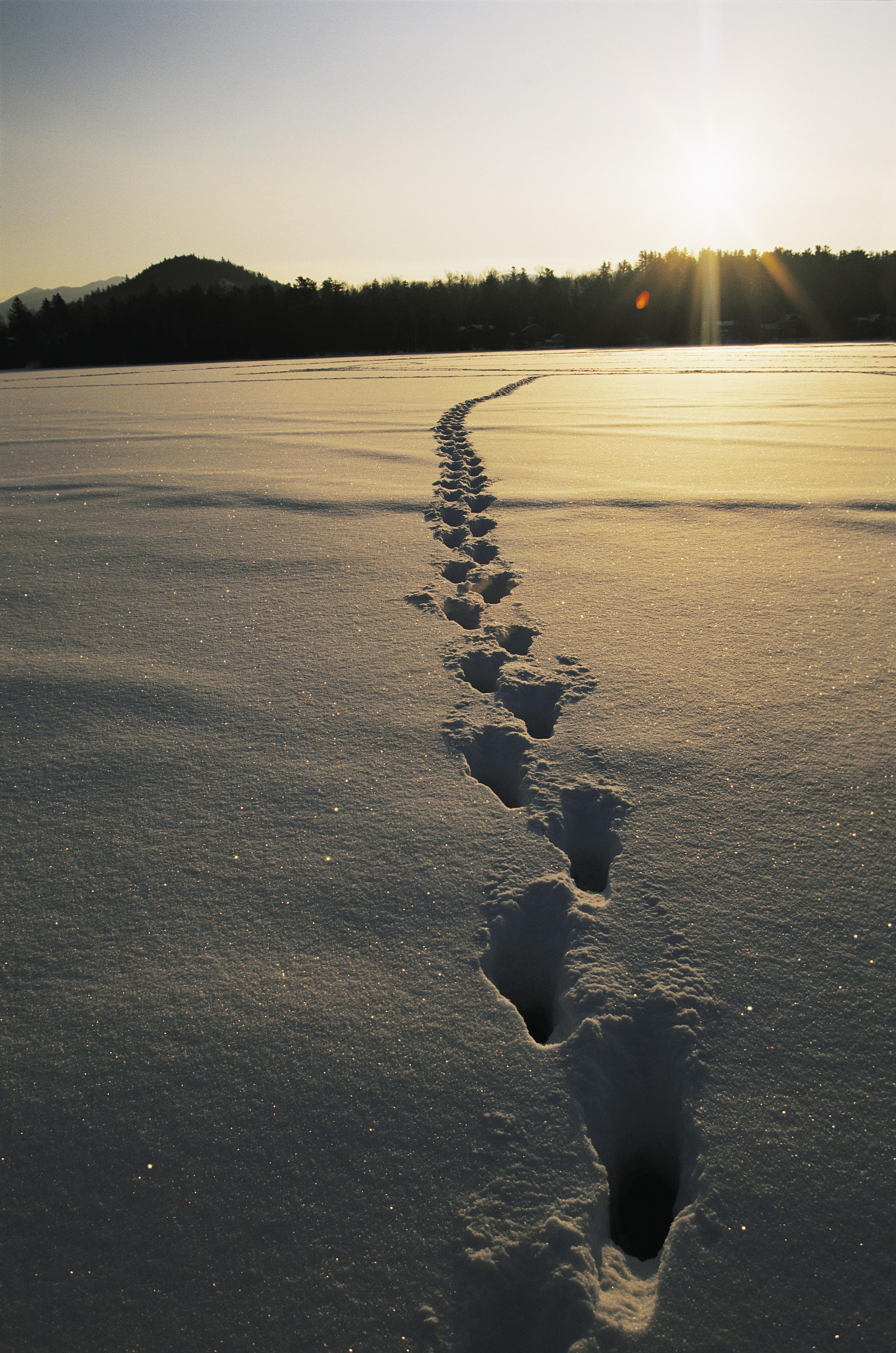 административно-территориальная фото следов человека на снегу место