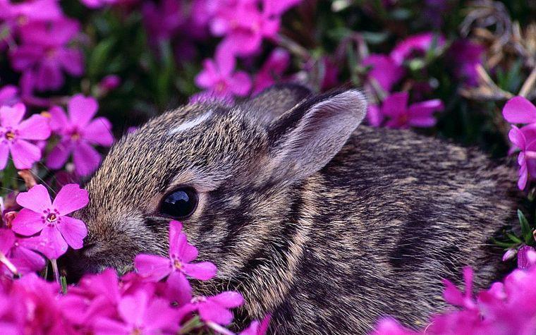 Картинки по запросу кролик цветы