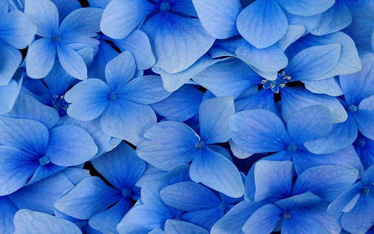 Картинки природы цветы голубые
