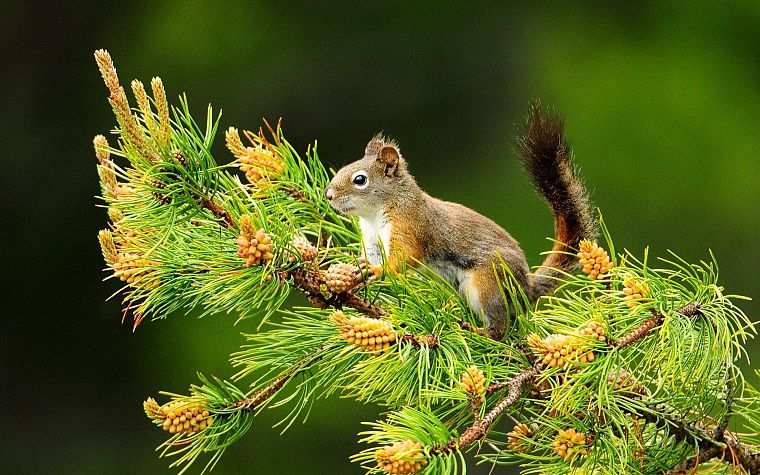 Картинки и фото с животными и природой