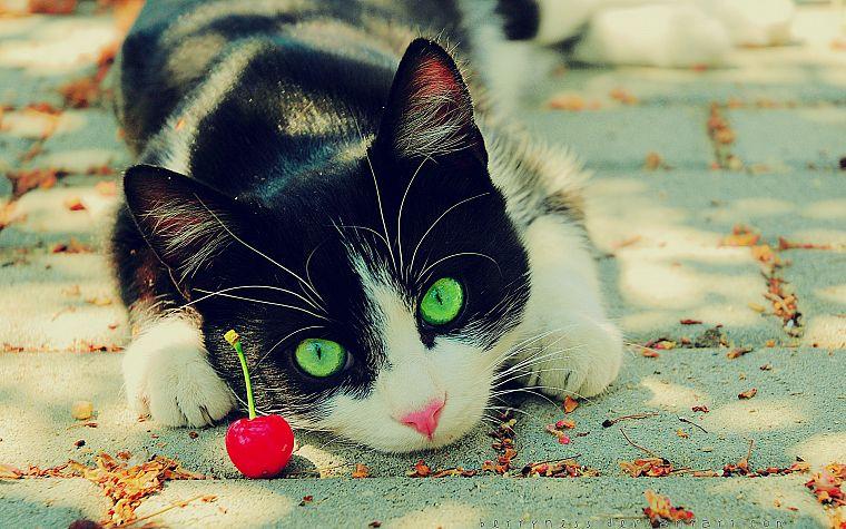 Картинки на рабочий стол природа кошки