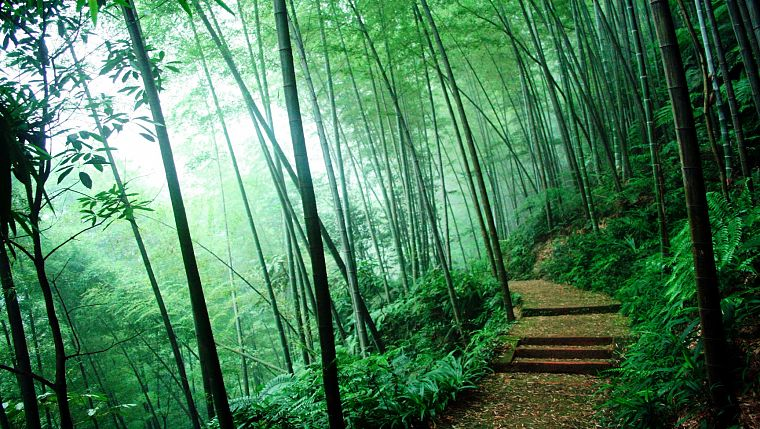 Картинки с бамбуком и природой